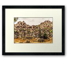 Small Joshua trees Framed Print