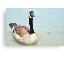 Fowl Canvas Print
