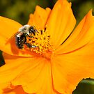 Bee and Orange Flower by vasu