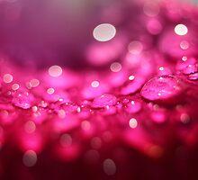 Rain drops on rose petal by yampy