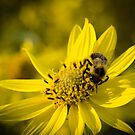 Bee and Yellow Flower by vasu