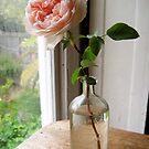 By the Window by Barbara Wyeth