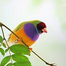 A Rainbow of Color... by Carrie Bonham