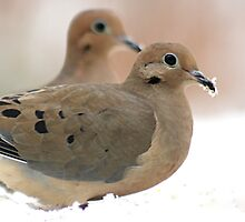 Two mourning doves by Linda Crockett
