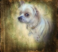 Sweet Little Hudson by jodi payne