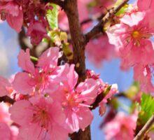 the Cherry blossom 2015 Sticker