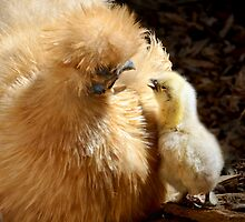 I love you Mummy.......... by patcheah