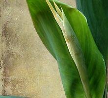 Lily Buds & Texture by Glenn Cecero