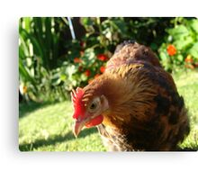 Fabulous chickens! Canvas Print
