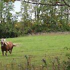 R3 - Basil's horse by Christina Adams