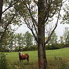 R3 - Basil's horse and poplar tree by Christina Adams