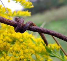 Rusty but Strong by Tammy Devoll