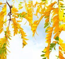 Citrus Skies... by LindaR