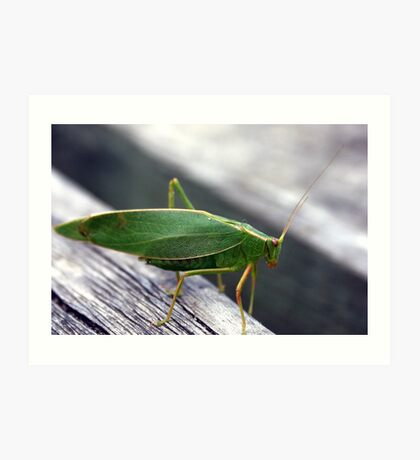 A green insect Art Print