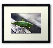 A green insect Framed Print