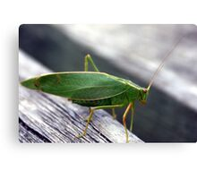 A green insect Canvas Print