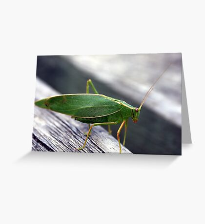 A green insect Greeting Card