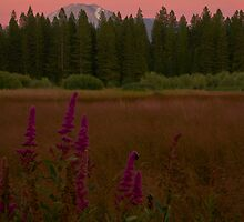 Moonlit Meadow by dwservingHim