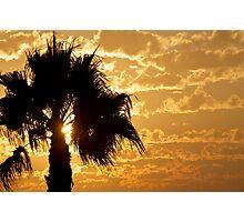 Palm Sunset 3 Photographic Print