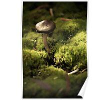Among the Moss Poster