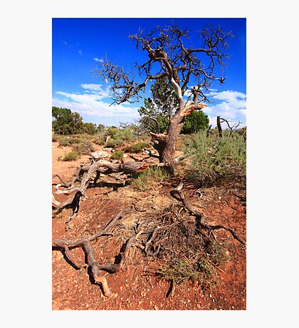 Extended roots Photographic Print