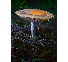 Mushroom Kingdom (7409) Photographic Print