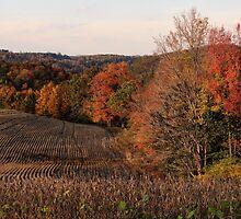 Farmland in fall by vigor