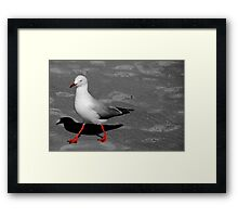 Red Legged Seagull Framed Print
