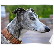 The Prince - whippet Poster