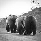 3 Brown Bears in Denali National Park by Clemsonpilot
