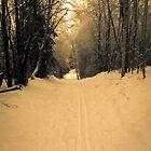 Snowy trail in Alaska by Clemsonpilot