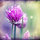 Fleurs de oboulette by Chris Armytage™
