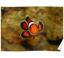 Little Wave from a Clown  Fish (Nemo) Poster