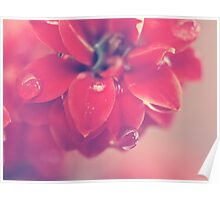 Dainty Flower with water droplet Poster