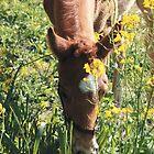 Happy Foal by Alayna de Graaf Photography