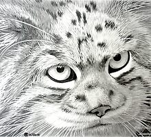 A Serious Cat by Michele Filoscia