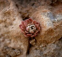 Stone Flower by Murat A CICEK