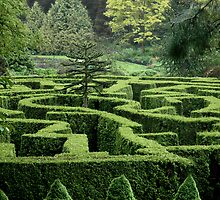 Garden Maze by Anthony M. Davis