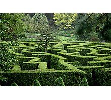 Garden Maze Photographic Print