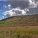 Bowland Views by John Hare