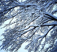 Snow Tree by Anthony M. Davis
