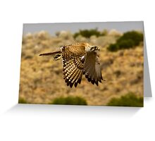 Falcon on the hunt Greeting Card