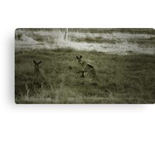 Dad, Mum and Junior (in the pouch) Canvas Print