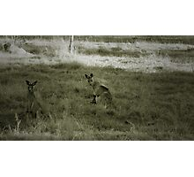 Dad, Mum and Junior (in the pouch) Photographic Print