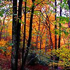 Autumn Forest by Anthony M. Davis