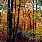 Autumn Forest by Anthony M. Davis