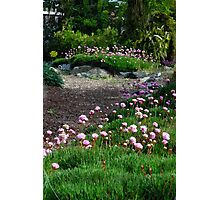 Floral Path Photographic Print