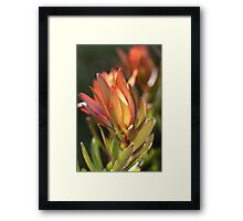 flowers-protea Framed Print