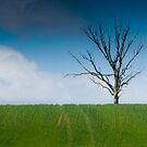 Wind swept by Mark Elshout