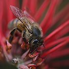 Bee-utiful  on Red by Larry Lingard-Davis
